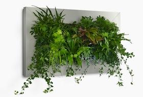 Planten schilderijen botanico specialist in hydrocultuur for Planten schilderij intratuin